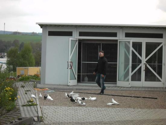 Taubenschlag der Sturzflugtauben