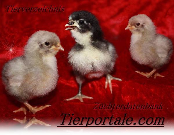 Tierportale.com